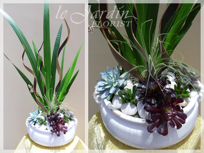 Planters And Live Plants Abacoa Jupiter Florist