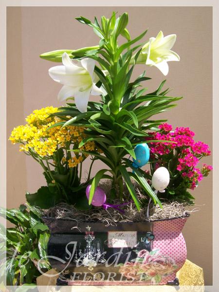 Planters And Live Plants Abacoa Jupiter Florist